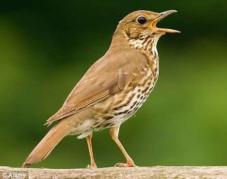 Stop Press: Change of Date for Birdsong Course #2